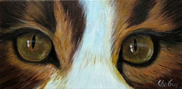 chat yeux jaune