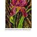 Iris et boutons mauves copie thumbnail