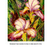 Splendeur d'iris thumbnail