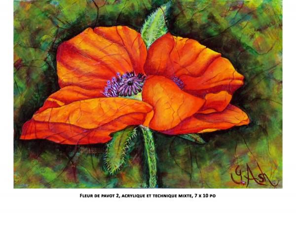 fleur de pavot 2