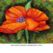 fleur de pavot 2 thumbnail