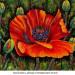 Fleur de pavot 1 thumbnail