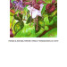 Fuchsias 2 thumbnail