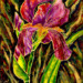 Iris et boutons mauve thumbnail