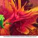Tulipe Perroquet aux couleurs ardentes thumbnail