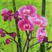 Orchidée à saveur éxotique thumbnail