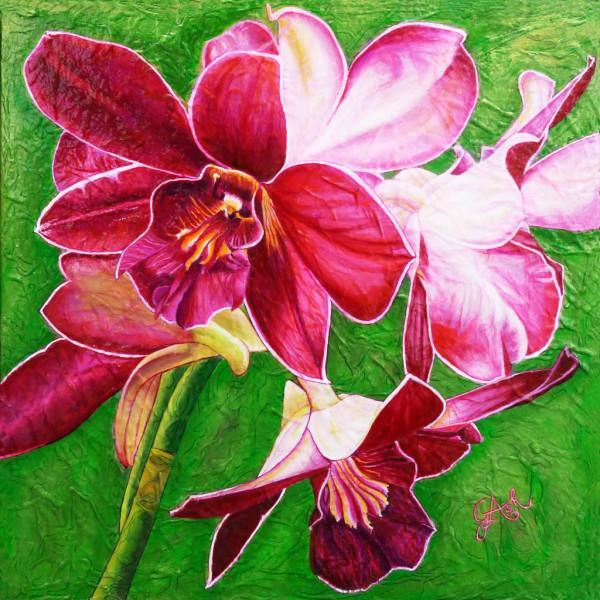 Orchidées pourpre