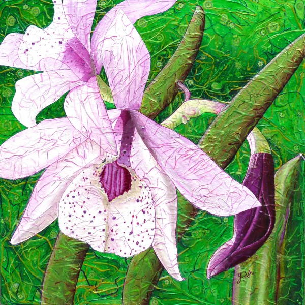 Orchidées de rêve