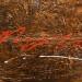 Série Bronzaï - Métallurgisme artistique - techniques mixtes, 18 x 36 pouces thumbnail